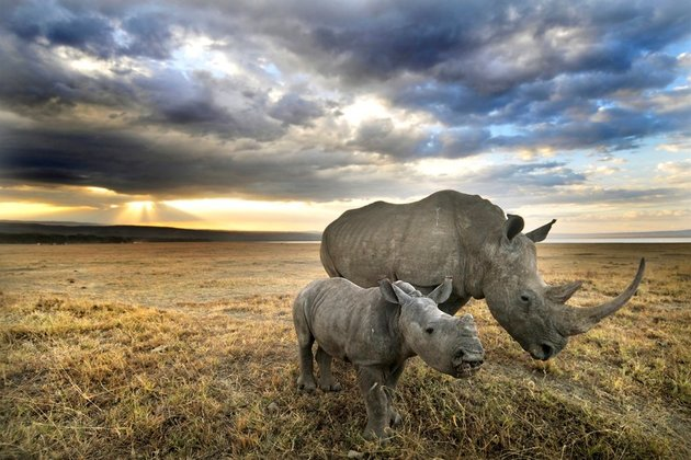 Two White Rhinos killed and dehorned at Limpopo game reserve