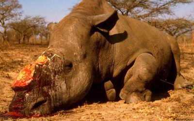 Facts About The Poaching Industry in South Africa